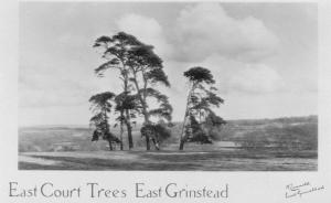 East Court Trees
